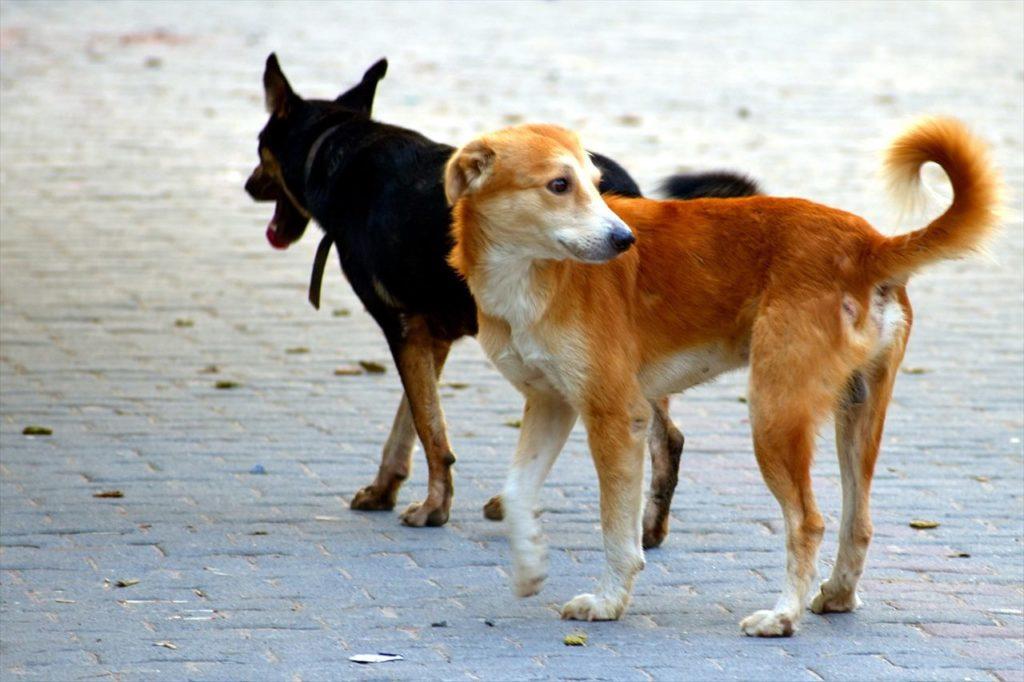 野犬の写真