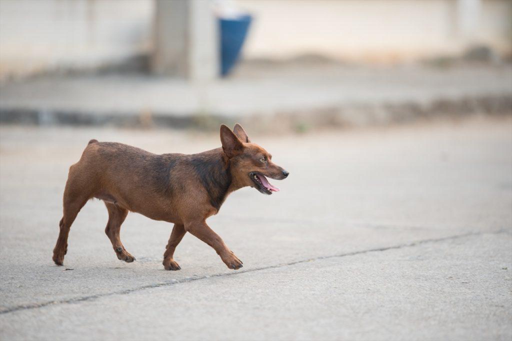 犬が散歩している写真