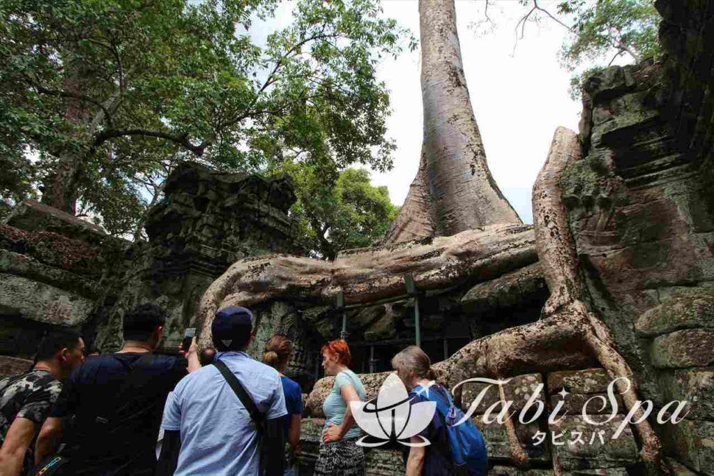 タプロームの樹木