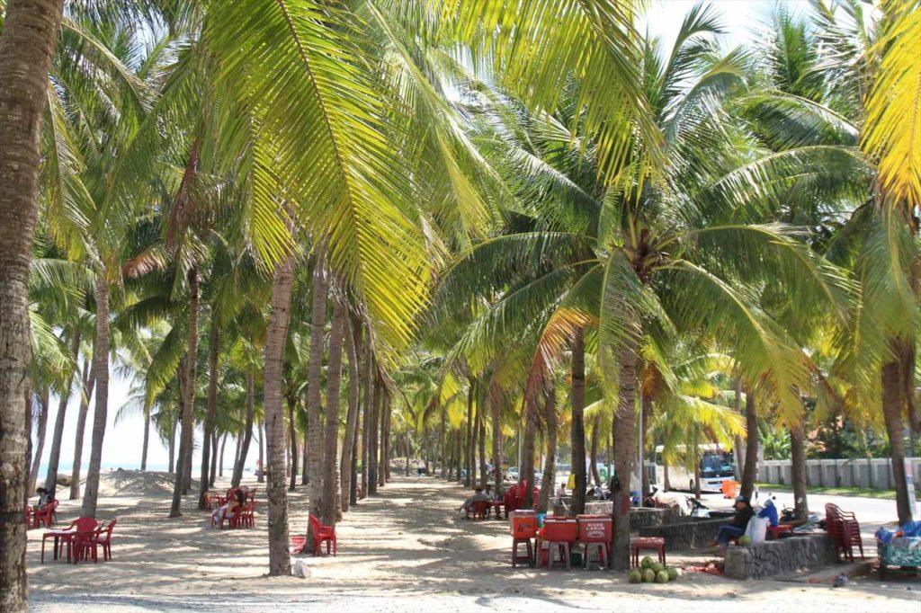 クアダイビーチの楽しみ方① 南国ヤシの木の下で日光浴