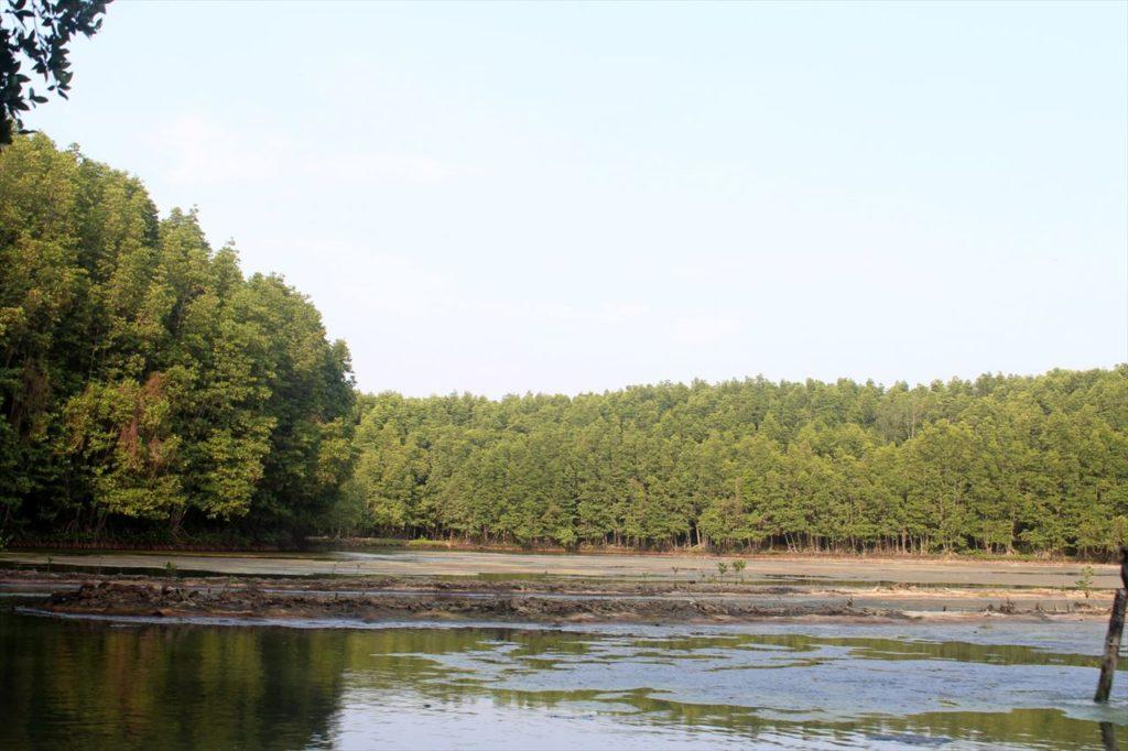 ベトナムらしい大自然の宝庫。カンザーマングローブの森鑑賞ツアーに参加しよう!