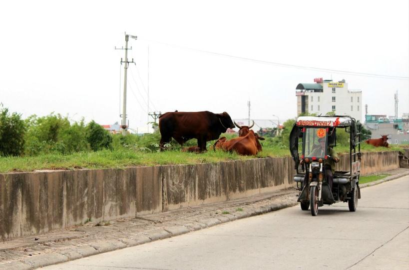 バッチャン村へ行く道中の風景